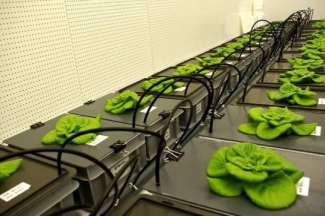 Uzayda bitki yetiştirebilmek için yeni toprak üretildi